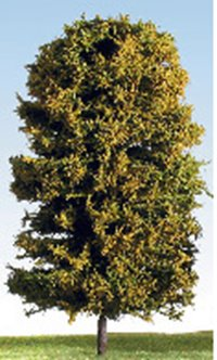 175mm Autumn/Blossom (Mixed Colours) Deciduous Tree
