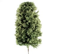 175mm Green Deciduous Tree