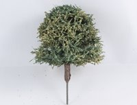 50mm Green Deciduous Tree