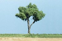 Gnarled Trees 4 ½ inch (Pack of 2)